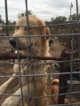 Our Investigation Saves 218 Animals in West Texas Largest Ever Animal Seizure Case.